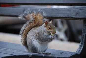 squirrel-783160_1280.jpg
